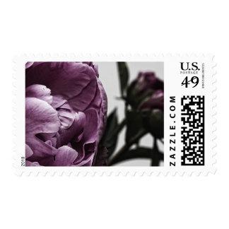 Eggplant Purple Peony Postage Stamp