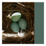 Eggs In Nest - Your Text Poster