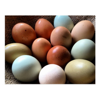 Eggs of all Shades Postcard