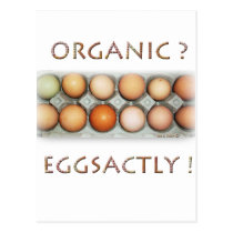 EGGSACTLY POSTCARD