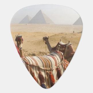 Egipto, El Cairo. Mirada de reclinación de los cam Plectro