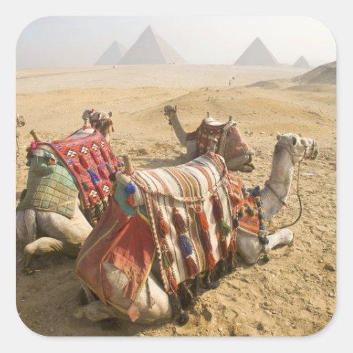 Egipto, El Cairo. Mirada de reclinación de los Calcomanias Cuadradas