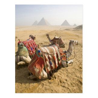 Egipto, El Cairo. Mirada de reclinación de los Tarjetas Postales