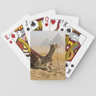 Egipto, El Cairo. Un camello solitario mira a trav Baraja De Póquer