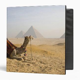 Egipto, El Cairo. Un camello solitario mira a trav