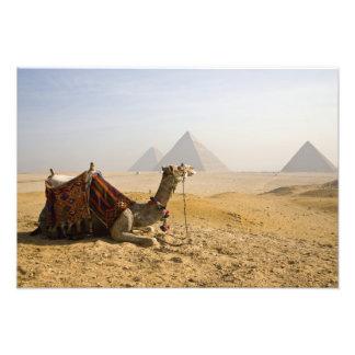 Egipto, El Cairo. Un camello solitario mira a trav Cojinete