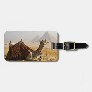 Egipto, El Cairo. Un camello solitario mira a trav Etiqueta De Maleta