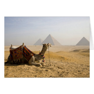 Egipto, El Cairo. Un camello solitario mira a trav Tarjeta De Felicitación