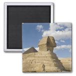 Egipto, Giza. El gran Sphynx sube sobre Imán Cuadrado