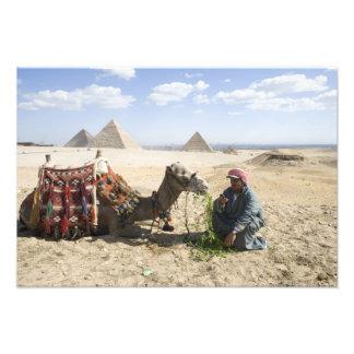 Egipto, Giza. El hombre nativo alimenta su camello Fotografía