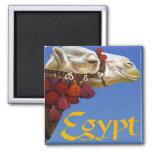 Egipto Imanes
