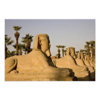 Egipto, Luxor. La avenida de esfinges lleva a Cojinete