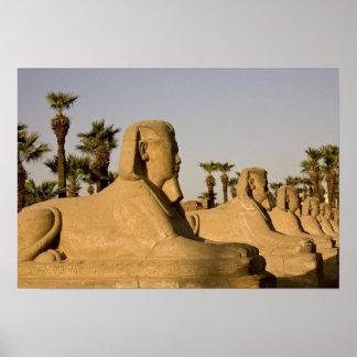 Egipto, Luxor. La avenida de esfinges lleva a Póster