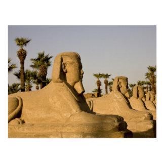 Egipto, Luxor. La avenida de esfinges lleva a Tarjetas Postales