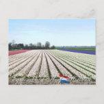 Egmond aan den Hoef Bulb Flowers Holland Postcard