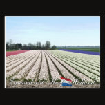Egmond aan den Hoef Bulb Flowers Holland Postcard