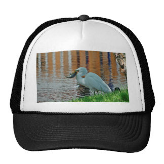 Egret and its catch mesh hat