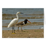 Egret and Oystercatcher card