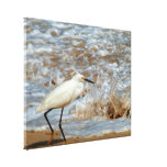 Egret and Wave Splash Gallery Wrapped Canvas