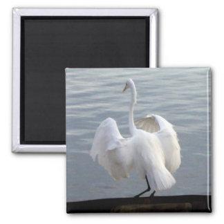 Egret at Lake Merritt - Magnet