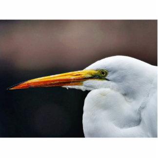 Egret Bird Animal Photo Cutout