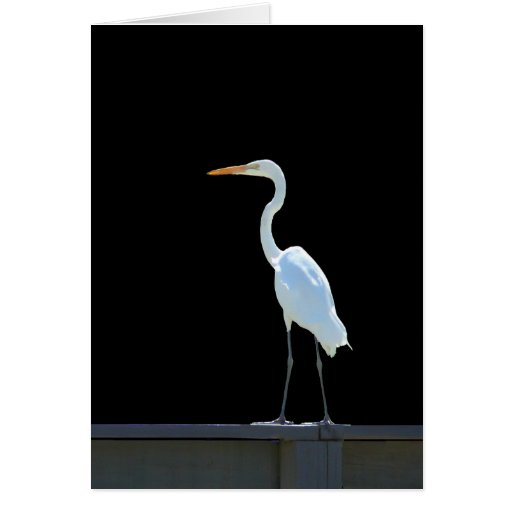 Egret Bird On Railing Greeting Card