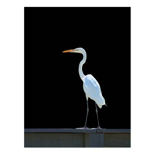 Egret Bird On Railing Postcard