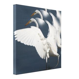 Egret Bird Wildlife Animals Wetlands Photography Canvas Print