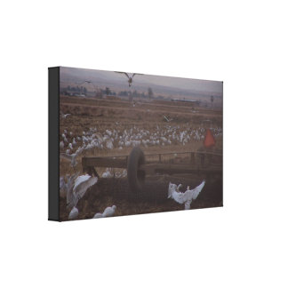 Egret Birds Wildlife Animal Photography Canvas Print
