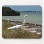 Egret blanco 2 Mousepad Tapete De Ratones