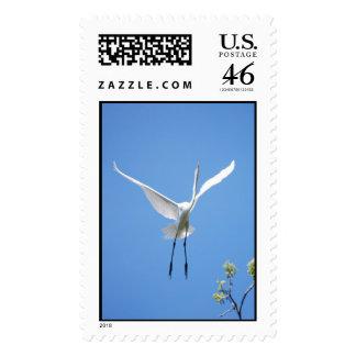 Egret blanco contra el cielo azul