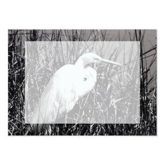 Egret blanco en el bw de las cañas invitación