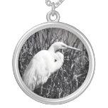 Egret blanco en el bw de las cañas joyerias