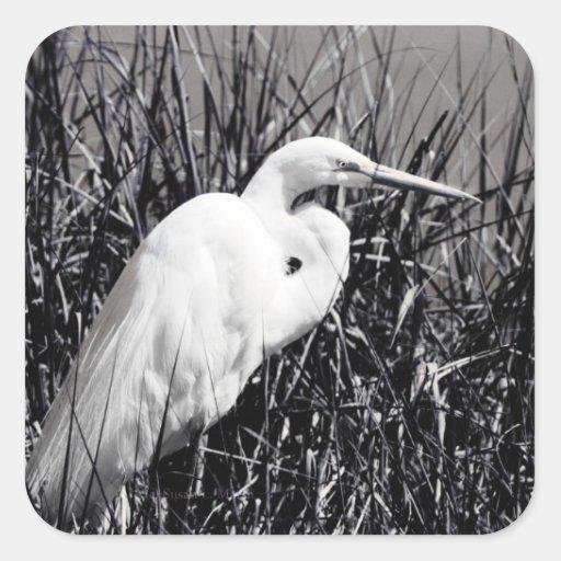 Egret blanco en el bw de las cañas calcomania cuadradas