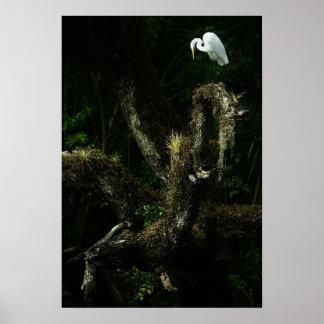 Egret blanco en la impresión del roble impresiones