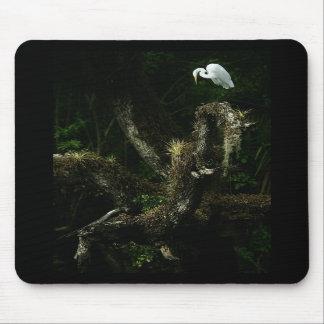 Egret blanco en mousepad del roble tapete de raton