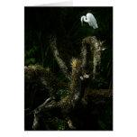 Egret blanco en tarjeta de nota del roble