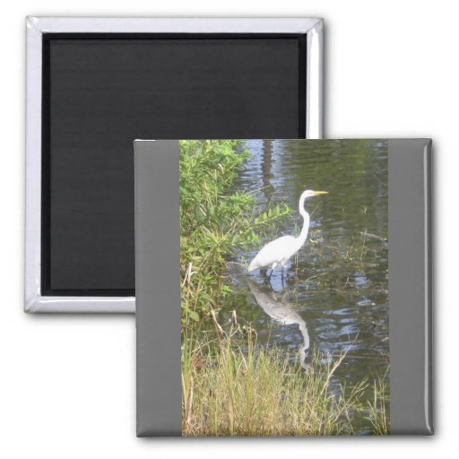 egret blanco imán