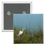Egret blanco que se coloca en agua de la hierba w pins