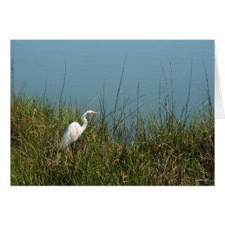 Egret blanco que se coloca en agua de la hierba w felicitacion