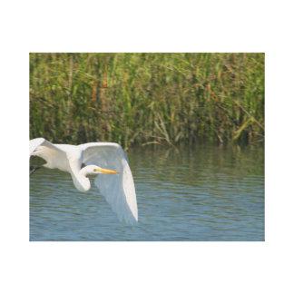 Egret blanco que vuela sobre hierba del agua impresiones de lienzo