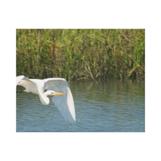 Egret blanco que vuela sobre hierba del agua impresiones en lona estiradas