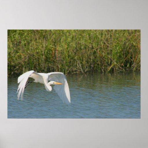 Egret blanco que vuela sobre hierba del agua poster