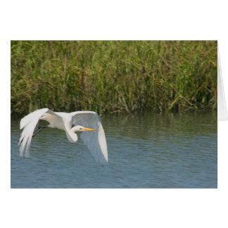 Egret blanco que vuela sobre hierba del agua tarjetas