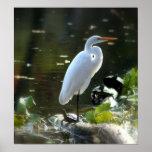 Egret con las tortugas poster