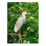 Egret de ganado en postal del árbol floreciente