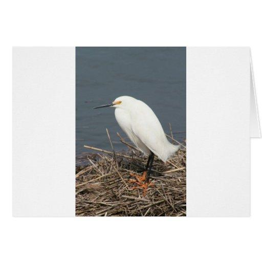 Egret de ganado tarjeta de felicitación