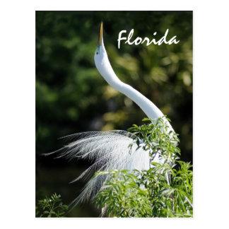 ¡Egret de la Florida! Postales