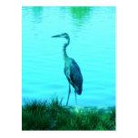 Egret de la garza de la turquesa postal