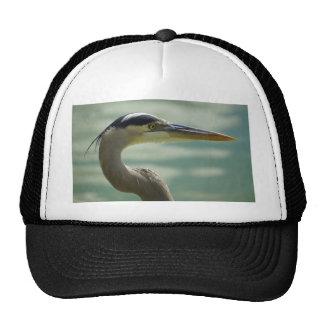 Egret de Lakeland Gorra